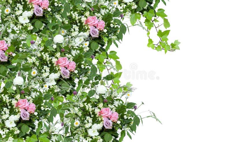 Decoración floral de la primavera con las rosas rosadas, las hojas verdes y las hierbas salvajes en el fondo blanco fotos de archivo