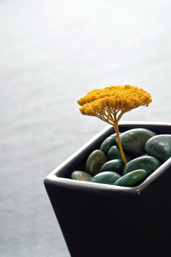 Decoración inspirada asiática con la flor secada imagen de archivo libre de regalías