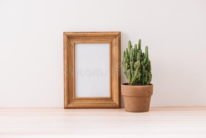Decoración moderna del sitio Diverso cactus y plantas suculentas en d fotografía de archivo libre de regalías