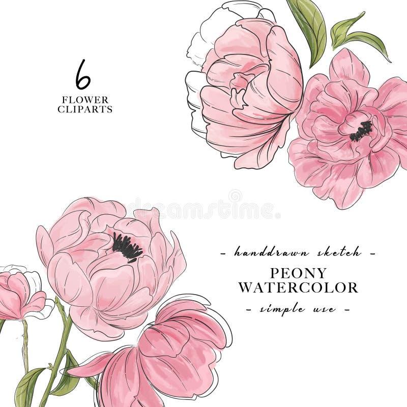 Decoración paony hermosa de 2 ramos Bandera del flower power Arte botánico de la acuarela moderna del vector Primavera del vintag libre illustration