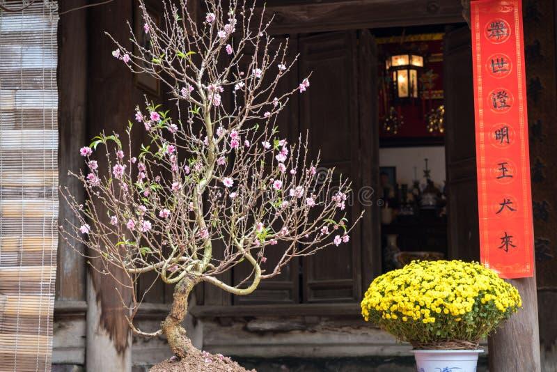 Decoración por el Año Nuevo lunar vietnamita Tet, con el flor del melocotón, la margarita amarilla y frases paralelas del rojo en fotografía de archivo libre de regalías