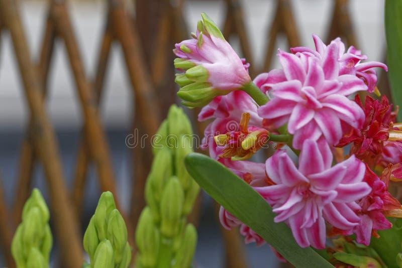 Decoración rosada de la flor fotos de archivo libres de regalías