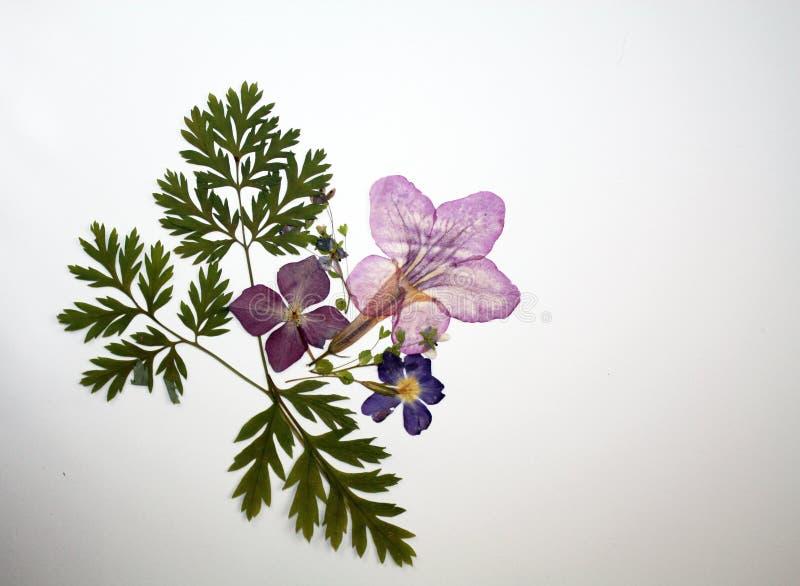 Decoración seca presionada hermosa de la opinión superior de las flores en el fondo blanco foto de archivo libre de regalías