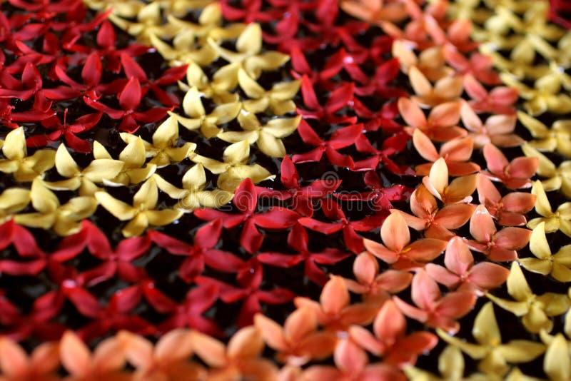 Decoración tailandesa de la flor foto de archivo