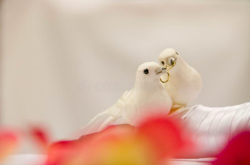 Decoraciones de la paloma imágenes de archivo libres de regalías