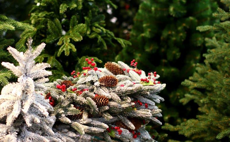 Decoraciones del árbol de navidad con los conos del pino con la nieve blanca imagen de archivo libre de regalías