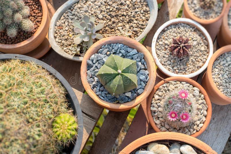 Decorate your home with cactus stock photo