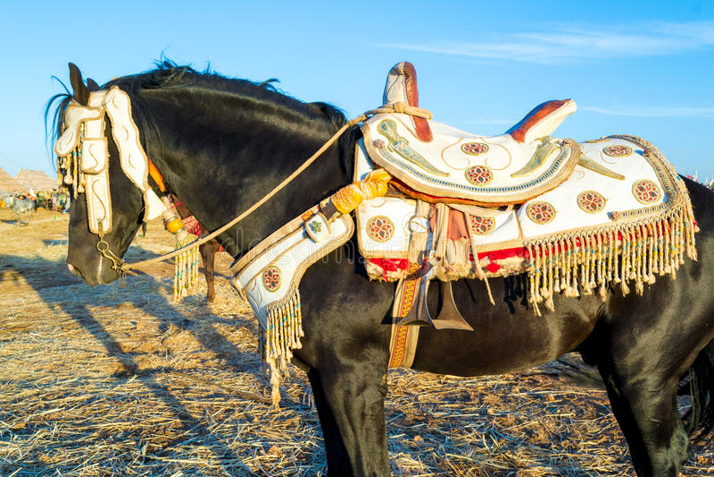 Decorated black horse stock photos