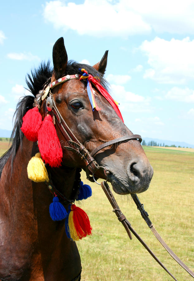 Decorated brown horse