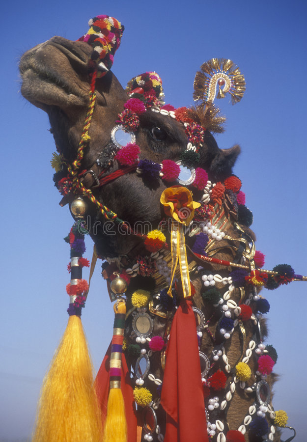 Decorated Camel