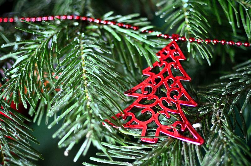 Red Christmas Tree ornament on green pine branch stock image