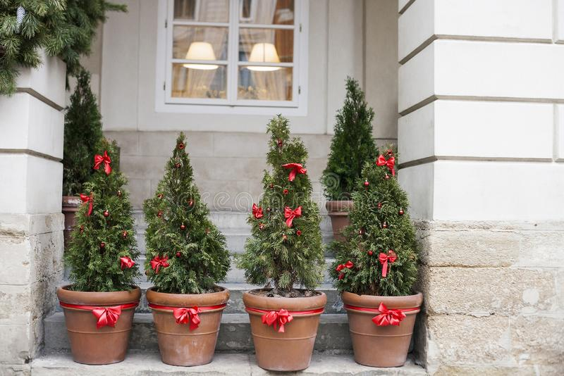 Decorated Christmas trees in pots near house. Decorated with red bows and balls Christmas trees in pots near house stock photography