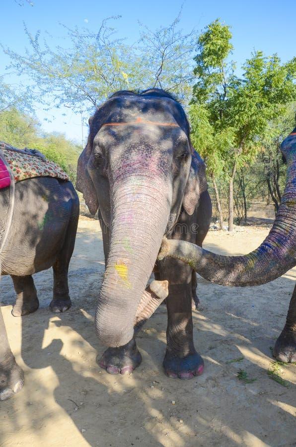 Decorated elephant in the elephant village, India stock photos