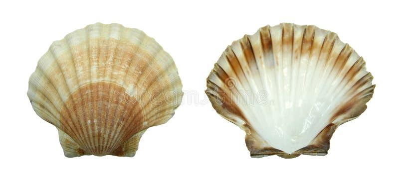 Decoratie: shell royalty-vrije stock foto