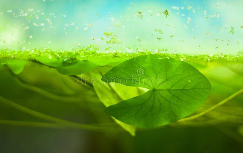 Decoratief aquarium royalty-vrije stock foto's