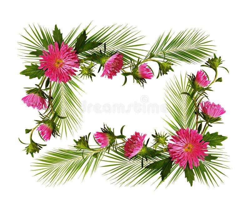 Decoratief kader met roze asterbloemen en pulm takken royalty-vrije illustratie
