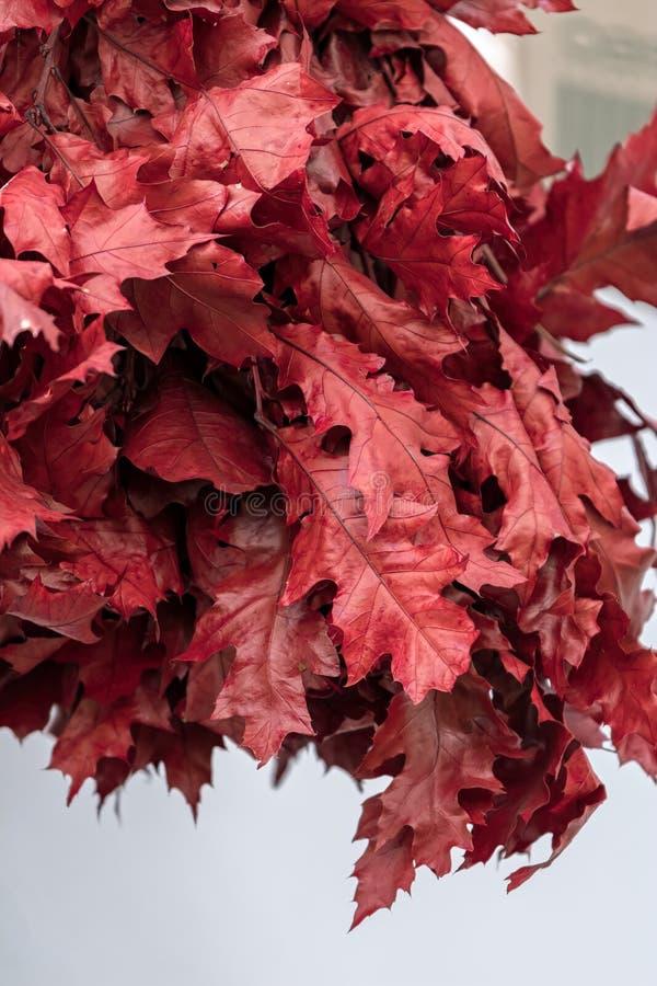 Decoratief rood esdoornblad stock fotografie