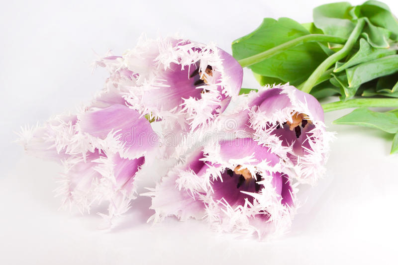 Decoratieve bloementulpen royalty-vrije stock afbeeldingen