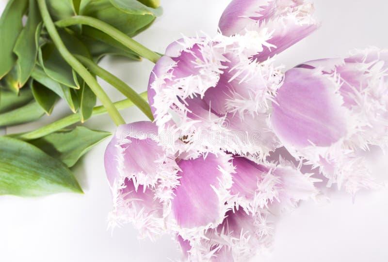 Decoratieve bloementulpen stock afbeelding