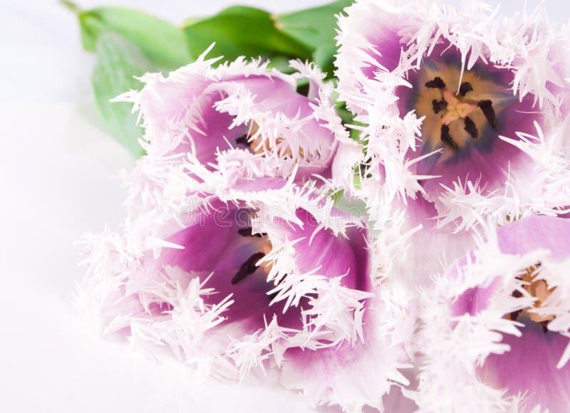 Decoratieve bloementulpen stock fotografie