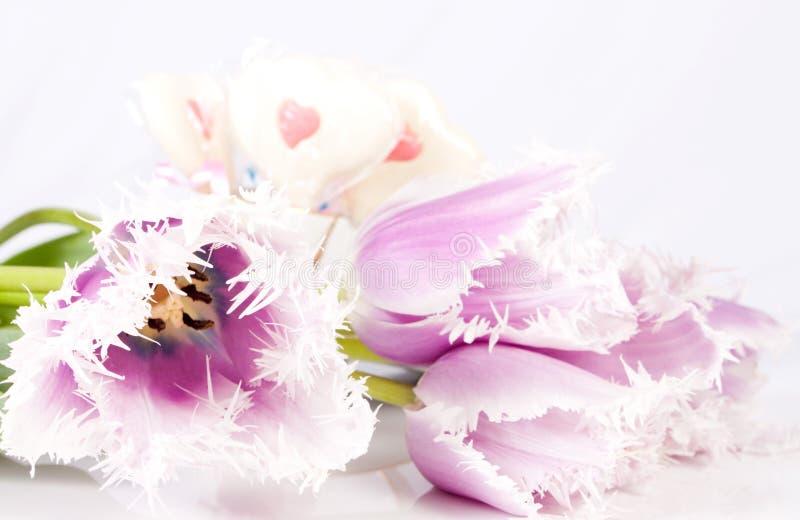 Decoratieve bloementulpen stock foto