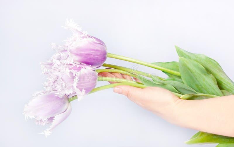 Decoratieve bloementulpen royalty-vrije stock afbeelding