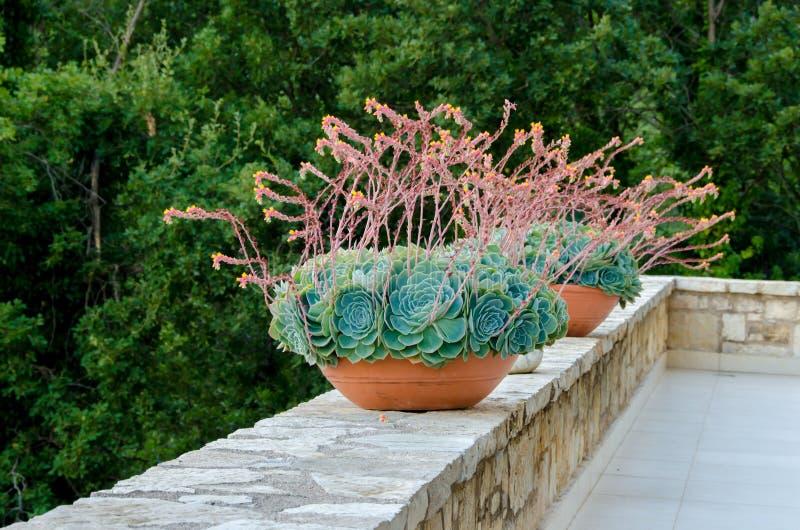 Decoratieve bloemtonnen royalty-vrije stock afbeeldingen