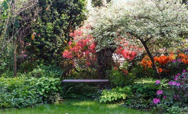 Decoratieve bomen struiken en bloemen in de tuin: arborvitae, pijnboom, spar, jeneverbes, rododendron royalty-vrije stock foto's