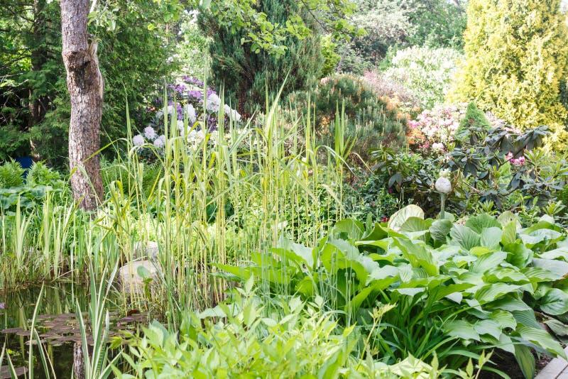 Decoratieve bomen struiken en bloemen in de tuin: sparren, arborvitae, pijnboom, spar, jeneverbes royalty-vrije stock afbeelding