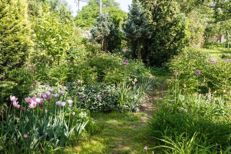 Decoratieve bomen struiken en bloemen in de tuin: sparren, arborvitae, pijnboom, spar, jeneverbes stock foto