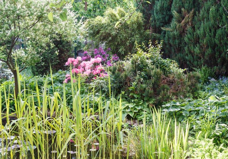 Decoratieve bomen struiken en bloemen in de tuin: sparren, arborvitae, pijnboom, spar, jeneverbes royalty-vrije stock foto's