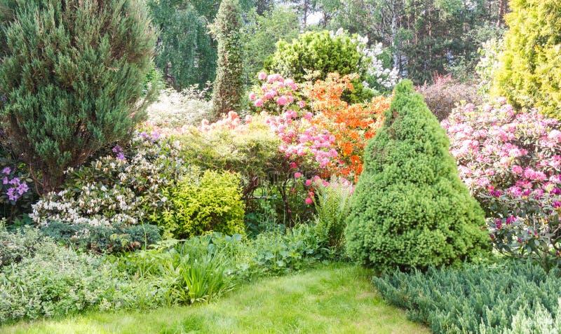 Decoratieve bomen struiken en bloemen in de tuin: sparren, arborvitae, pijnboom, spar, jeneverbes, rododendron royalty-vrije stock afbeeldingen