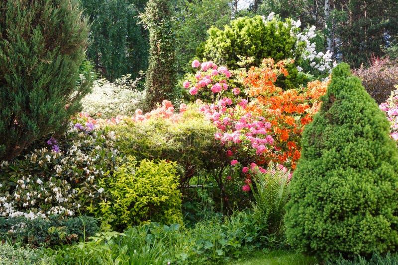 Decoratieve bomen struiken en bloemen in de tuin: sparren, arborvitae, pijnboom, spar, jeneverbes, rododendron royalty-vrije stock foto