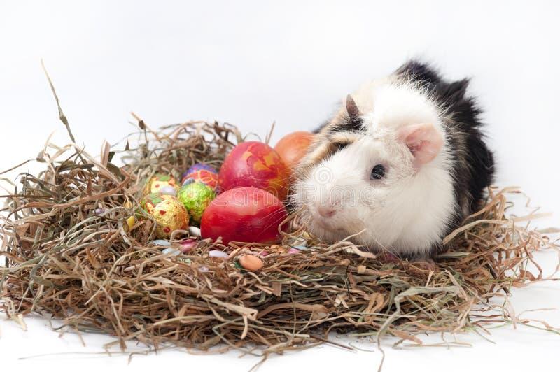 Decoratieve de chocolade en de kippeneieren van Pasen in het nest met gu royalty-vrije stock fotografie