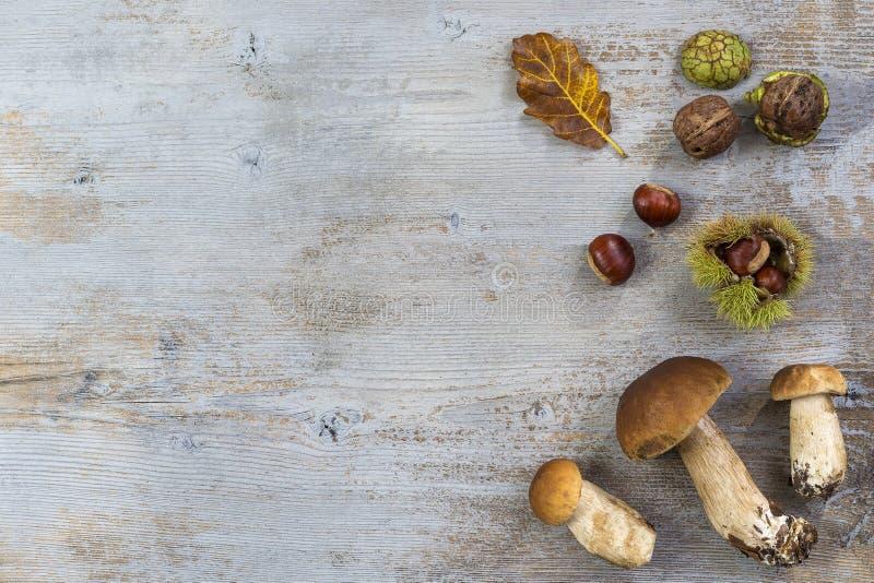 Decoratieve de herfst juiste grens met kastanjes, okkernoten, hazelnoten, eikels, eekhoorntjesbroden, en bladeren op grijze houte royalty-vrije stock foto's