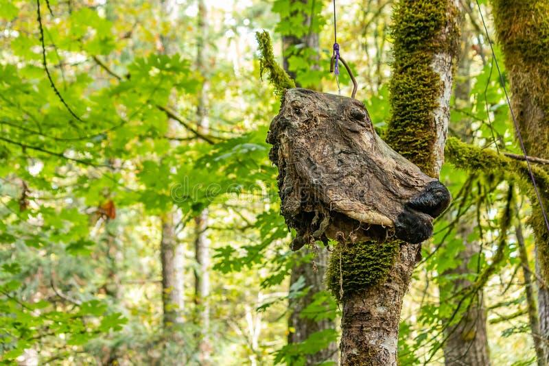 decoratieve enge koe die scull van boom hangen stock fotografie