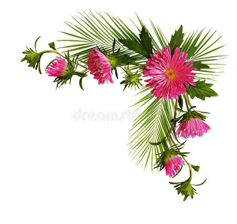 Decoratieve hoek met roze asterbloemen en pulm takken royalty-vrije stock foto