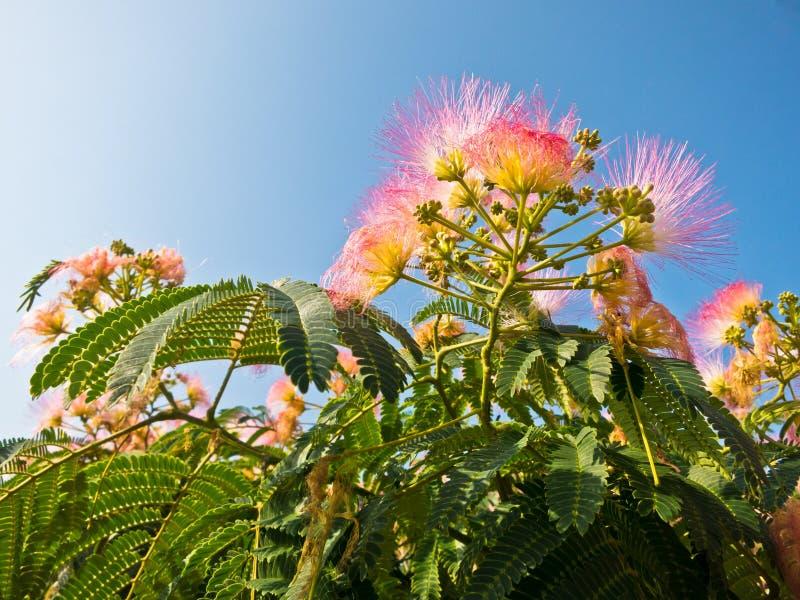Decoratieve kleurrijke mediterrane installaties bij zonnige ochtend, Sithonia stock foto's