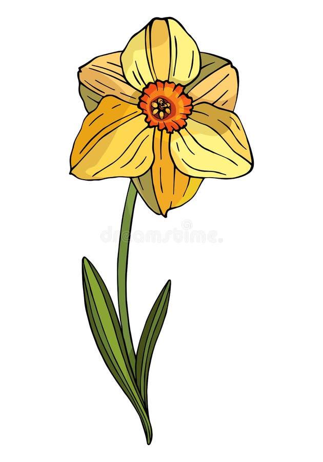 Decoratieve kleurrijke Narcissen vector illustratie