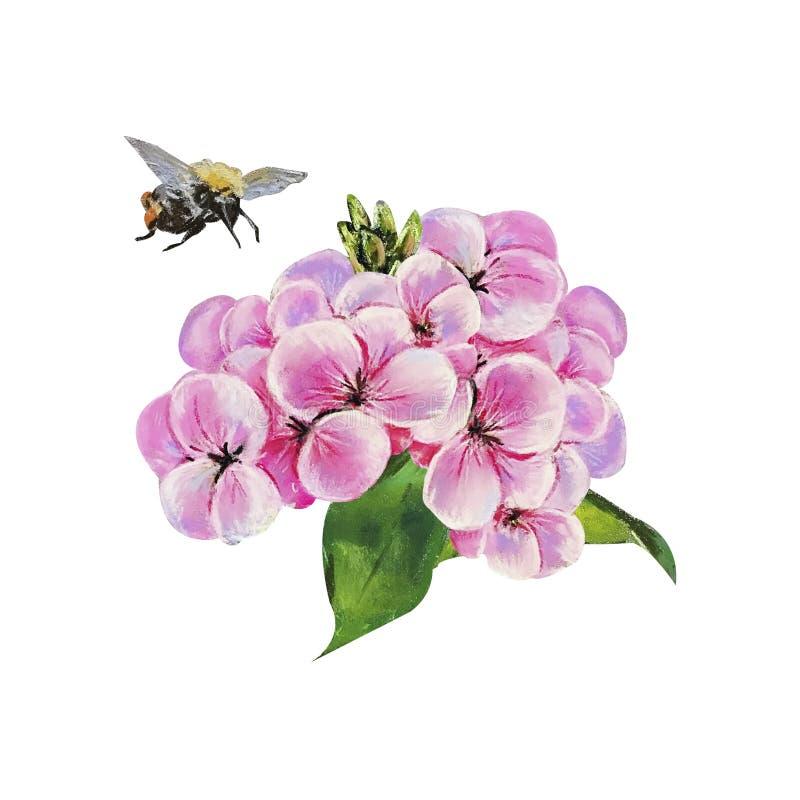 Decoratieve pastelkleursamenstellingen met bloemenhydrangea hortensia en bumbl royalty-vrije illustratie