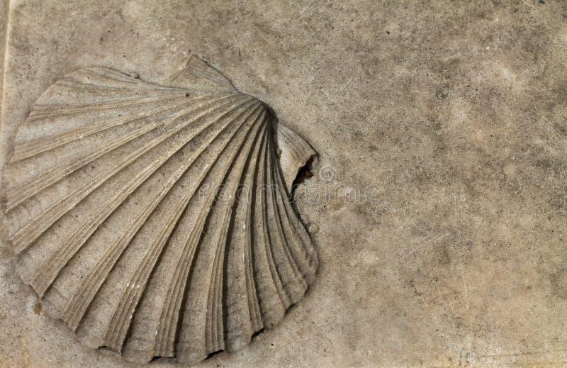Decoratieve shell royalty-vrije stock foto's