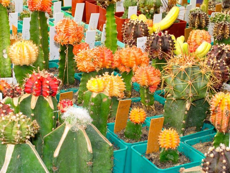 Decoratieve succulents stock fotografie