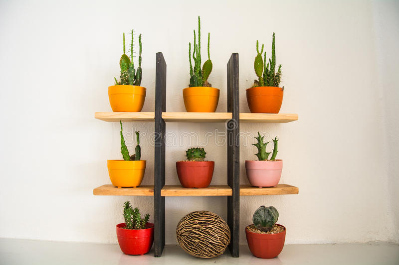 Decoration cactus on the shelf. The small cactus on the shelf for decoration stock photo