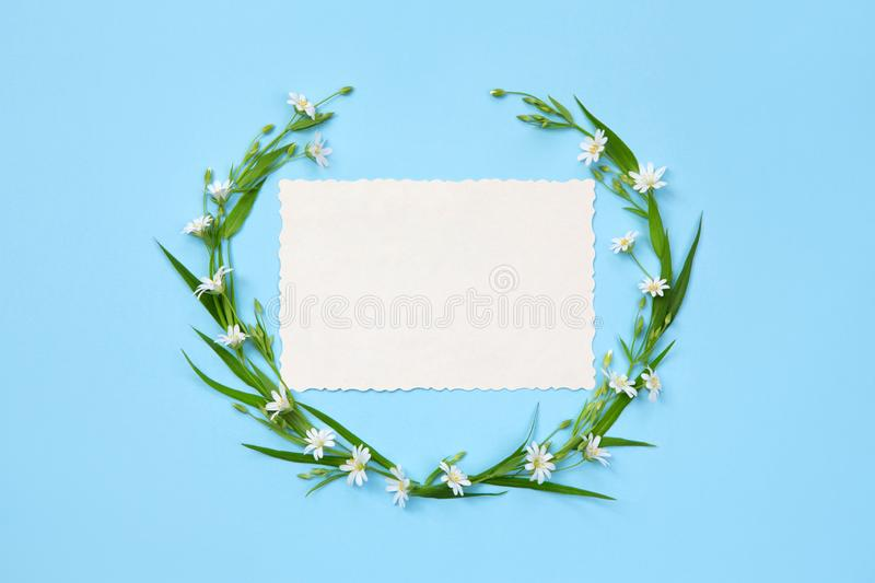 Decoration elements of delicate wildflowers and leaves. Blue background. Holiday frame. Copy space, flat lay. Decoration elements of delicate wildflowers and royalty free stock photography
