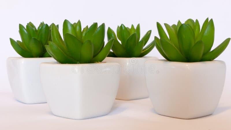 Decoration green plants stock photography