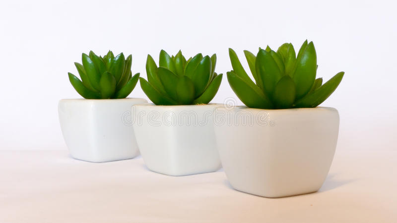Decoration green plants royalty free stock images