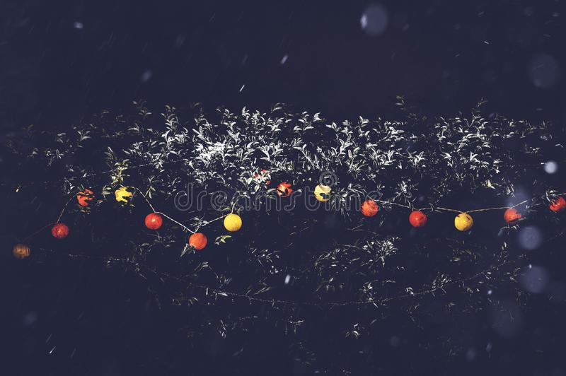 Decoration light background on outdoors tree with heavy snowy winter weather. Red and yellow light color for Christmas and New stock images