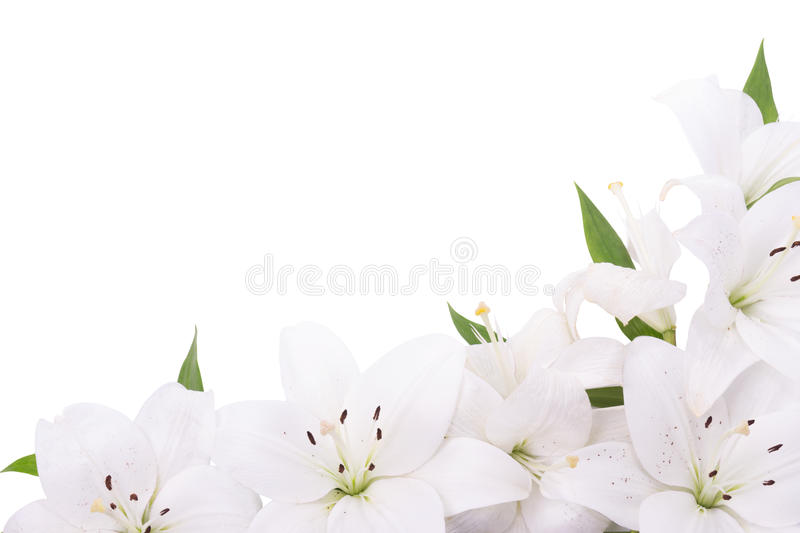 Download Decoration from lilies stock photo. Image of leaf, pollen - 94567800