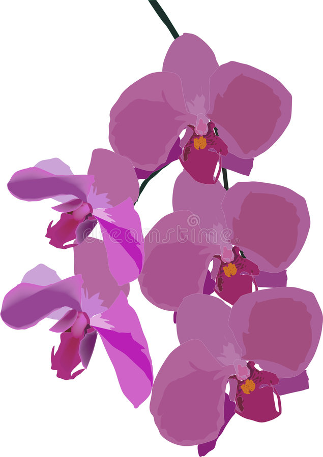 Decoration with pink orchid stock illustration