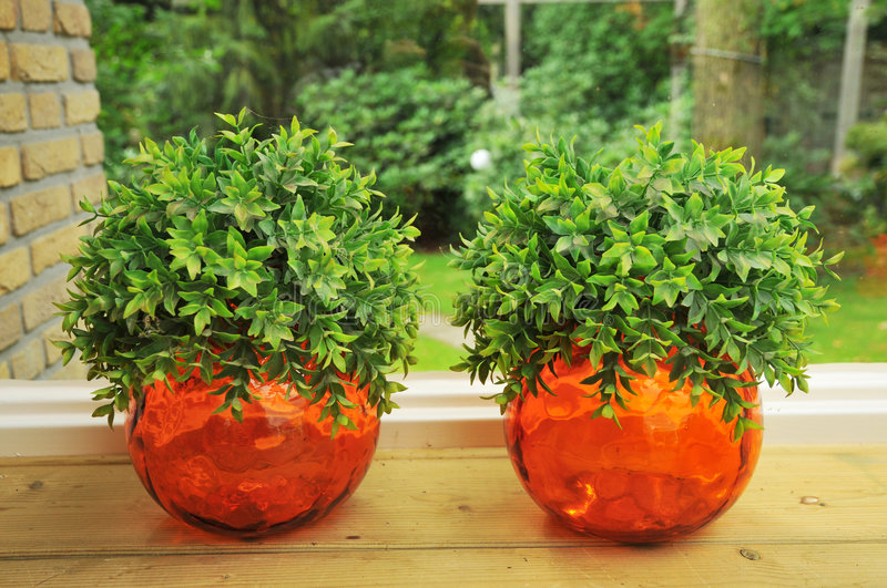 Download Decoration plants stock image. Image of ball, interior - 6013989